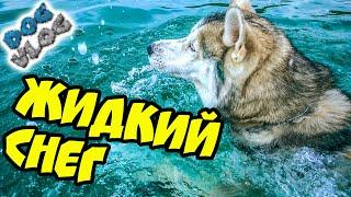 DOGVLOG: НИКОГДА НЕ ЕЗДИТЕ НА МОРЕ ОСЕНЬЮ! Хаски в шоке! Говорящая собака
