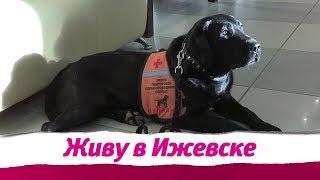Собаки-проводники в Ижевске