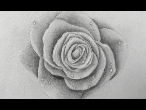 Aprendiendo A Dibujar Como Dibujar Una Rosa Arte Divierte Youtube