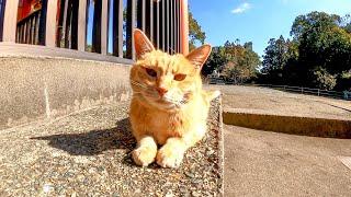神社で寝ていた野良猫をナデナデしてきた