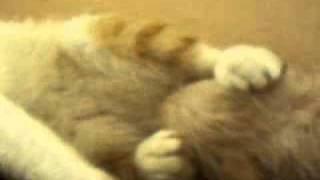 dog licking cats balls