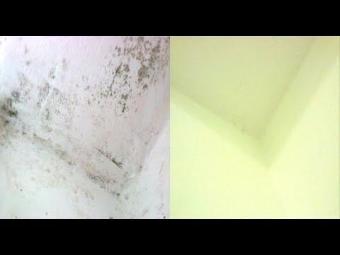 Как  народными средствами избавиться навсегда от грибка и плесени на стенах в доме,подвале