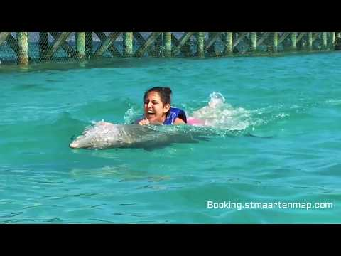 Dolphin Discovery: Swim with the Dolphins in Anguilla