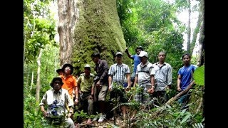 Find rare forest orchids in Vietnam