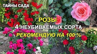 Наши розы в октябре. РОЗЫ КОТОРЫЕ НЕ ПОДВЕДУТ 100 . Лучшие сорта роз. Осенняя прогулка по саду.