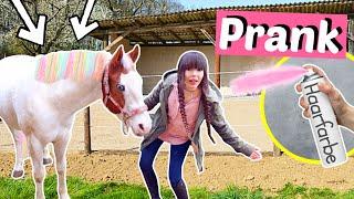 Ich FÄRBE das Pferd meiner BFF bunt + Ankündigung | ViktoriaSarina
