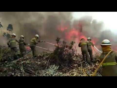 Video do Combate do GIPS no Incêndio de Pedrogão Grande - Figueiró dos Vinhos