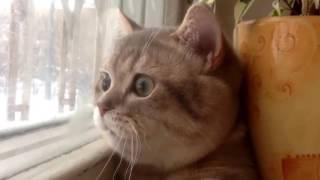 Стоимость усыпления кота на дому
