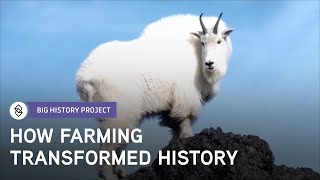 Why Was Agriculture So Important? | Big History Project