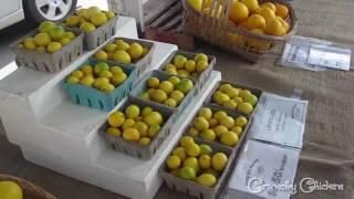 San Diego Farmers Market Tour