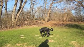 How To Train Your Dog To Catch A Frisbee In The Air