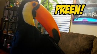 toucan-preening-it-s-feathers-up-close