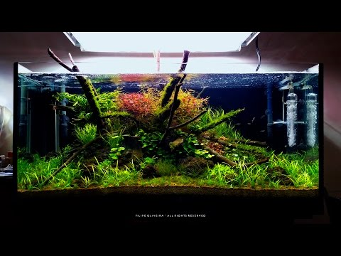 Preview of my 350L Planted Aquarium with 3 weeks after setup