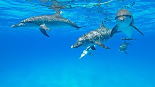 Dolphin Healing and Relaxation in The Bahamas 🐬 (so magical with wild dolphins!)