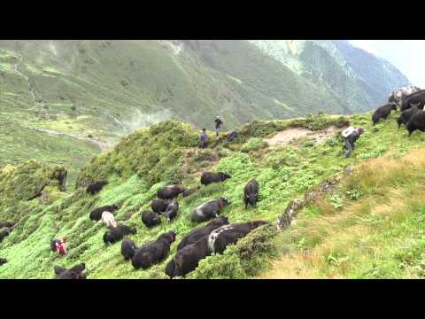 108 Yaks – A journey of love and freedom