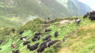 108 Yaks - A journey of love and freedom