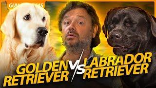 LABRADOR VS GOLDEN RETRIEVER! | RICHARD RASMUSSEN