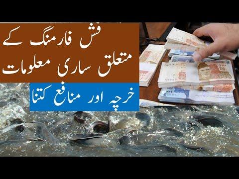 How To Start Fish Farming. Fish Farming In Pakistan Full Information In Urdu / Hindi