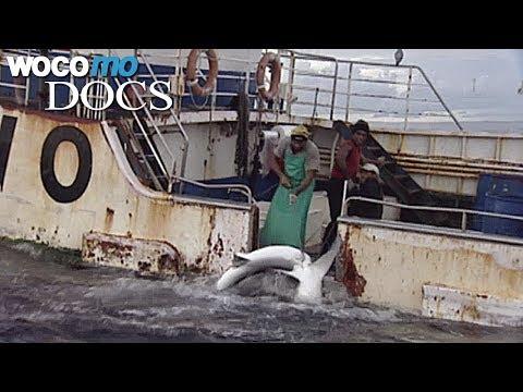 Vom Verschwinden der Fische Dokumentation, 2007