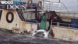 Vom Verschwinden der Fische (Dokumentation, 2007)