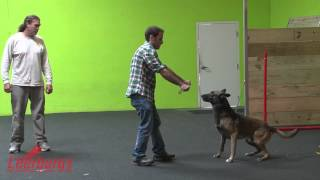 Play Demo From The Michael Ellis School For Dog Trainers