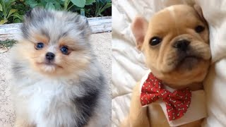 All The Puppies | Cute Dog Video Compilation 2017