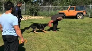Edmonton Police Service Canine Training
