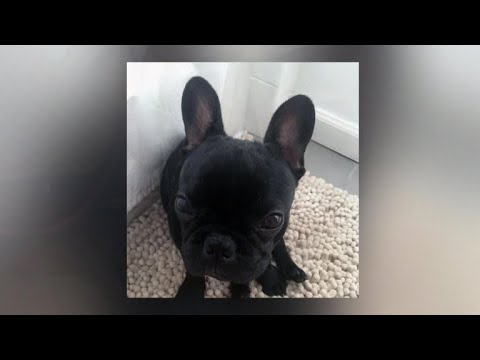 Family of dog that died on United flight speaks out