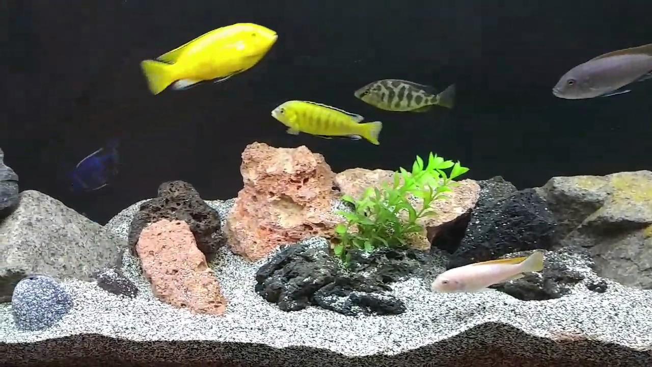 Calentador perfecto para un acuario youtube for Calentador acuario