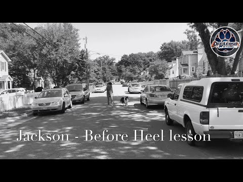 Heel Lesson Before and After | 45 Minutes | Off Leash K9 Training