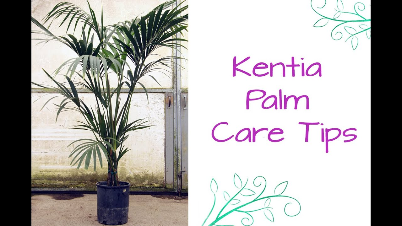 child friendly halloween lighting inmyinterior outdoor christmas an elegant plant for lower light the kentia palm youtube