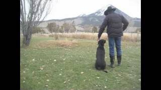 Aspen Dog Trainer Black Labrador Retriever Mae