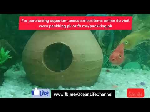 Use Of Green Liquid Or Malachit Green Medicine For Your Sick #fish In #aquarium.