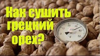 Технологический процесс переработки грецкого ореха: Сушка грецкого ореха. Как сушить орехи?