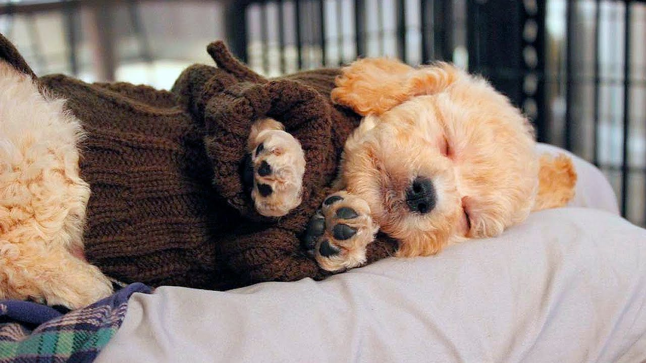 cute puppies & dogs sleeping #73 - youtube