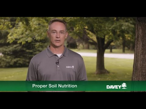 Importance of Soil Nutrients