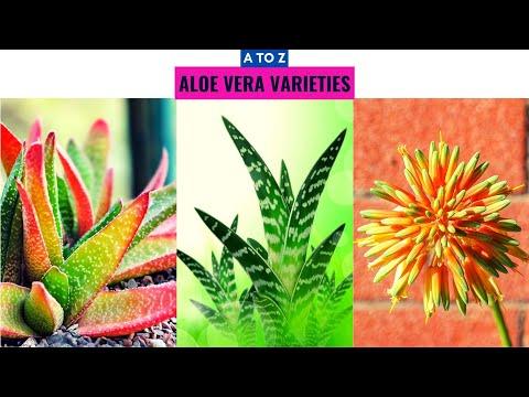 Aloe Vera Varieties A to Z
