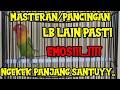 Lb Ngetik Ngekek Panjang Terbaru  Masteran Pancingan Lovbird Malas Bunyi  Mp3 - Mp4 Download