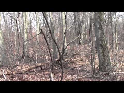 Neponset River Greenway Canton MA Fowl Meadow Part 8.