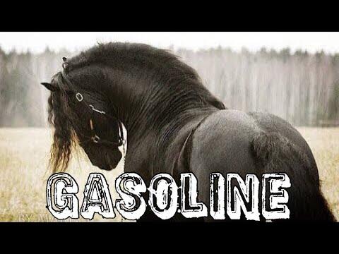 Gasoline || Friesian Horse Music Video ||
