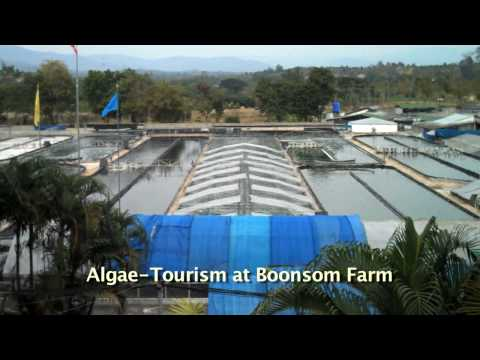 Algae Tourism at Boonsom Spirulina Farm in Thailand
