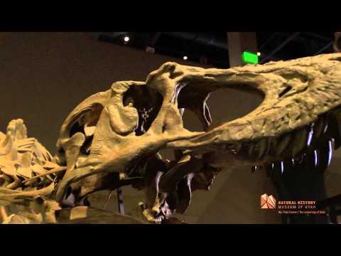 New dinosaur discovery: Lythronax argestes