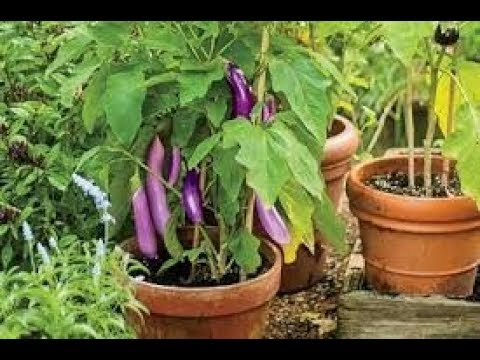 Roof Terrace Design Garden How To Do Gardening At Home In India