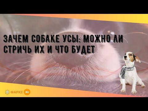 Вопрос: Для чего усы собаке?