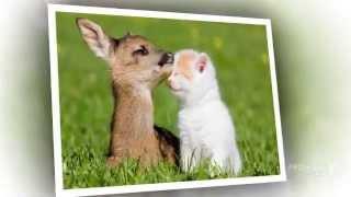 Милые котята, очень классные!