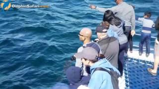Lovin' Gray Whale Season! Dolphin Dave's Diaries March 30, 2017