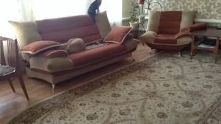 Что делают собаки, когда хозяев нет дома.(, 2015-02-07T06:45:48.000Z)