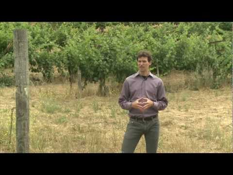 Global Warming's Impact on Premium Wines
