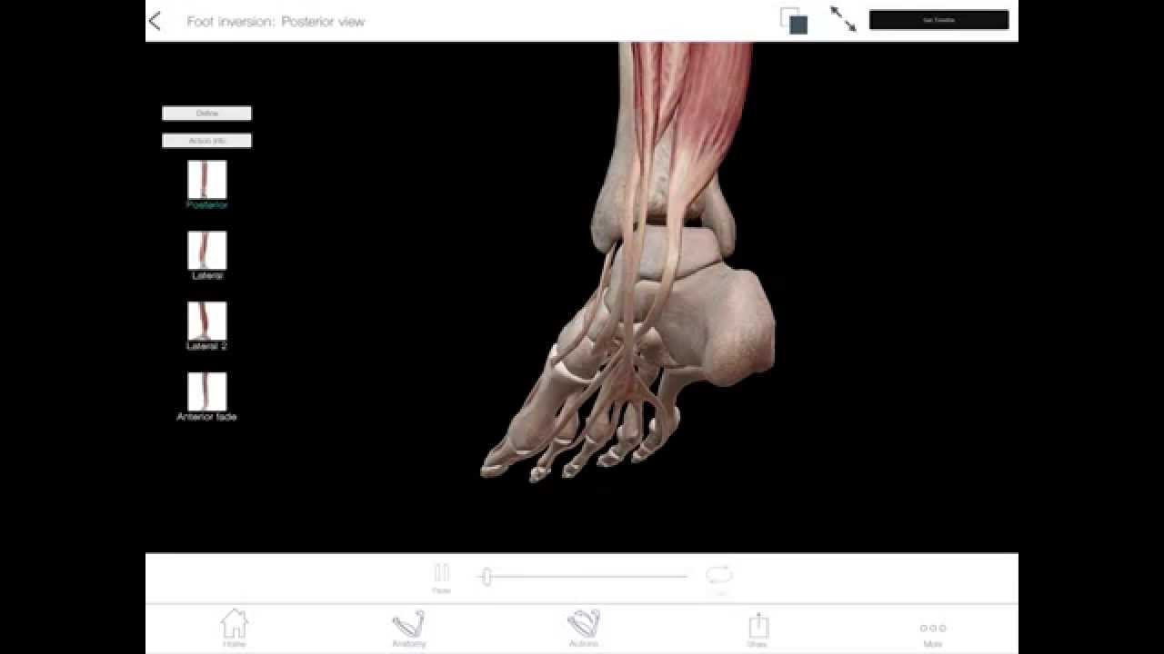 Learn@Visible Body - Foot Inversion and Eversion - YouTube