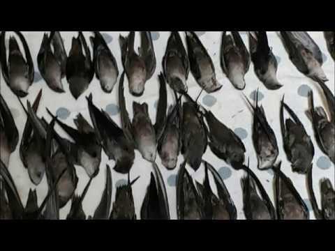 What Is Going On? Hundreds of Birds Die After Slamming Into NASCAR Hall of Fame Building